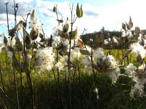 Native plants and ecological restoration